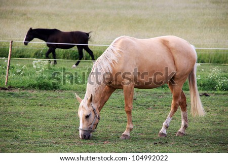 White Horse on the green Pasture - stock photo