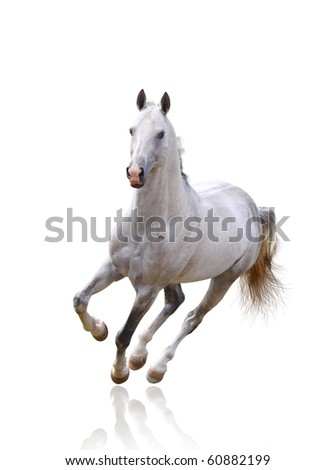 white horse on white isolated - stock photo