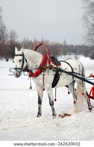 White horse on white snow. - stock photo