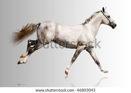 white horse over a grey gradient - stock photo