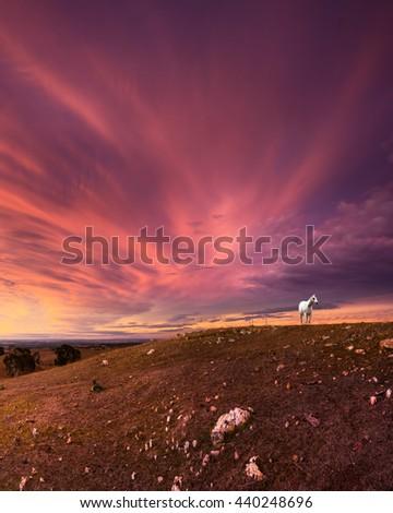 White horse overlooks a stunning sunset - stock photo