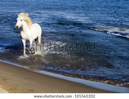 White Horse Running through water - stock photo