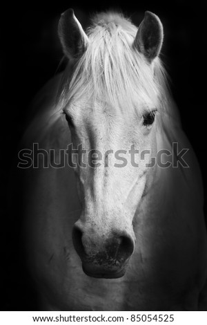 White horse's black and white art portrait. - stock photo