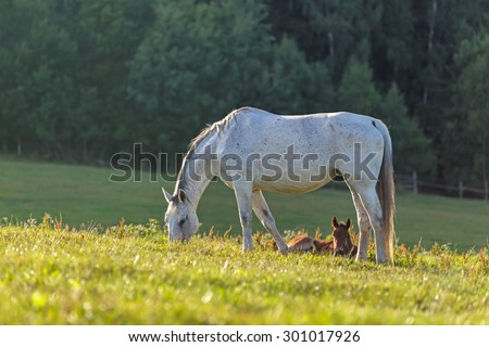 White horse with a foal grazing grass. - stock photo