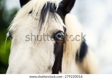 White horse with blue eyes - stock photo