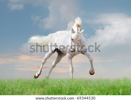 white horse with blue skies behind