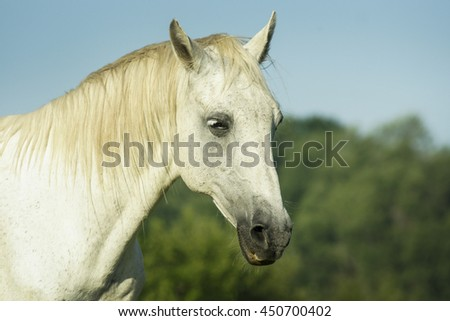 white horse with light mane standing in a green field under a blue sky