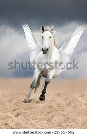 White horse with wings running free (pegasus) - stock photo