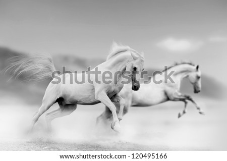 white horses in desert - stock photo