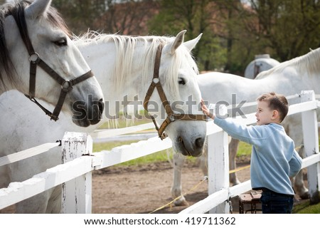 White horses with boy and soft touch