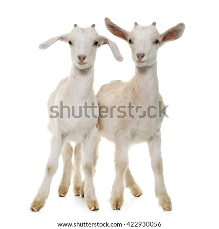 white kids in front of white background - stock photo
