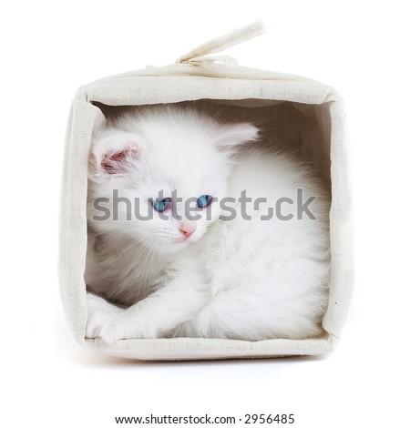 White kitten in a basket...Studio shot. - stock photo