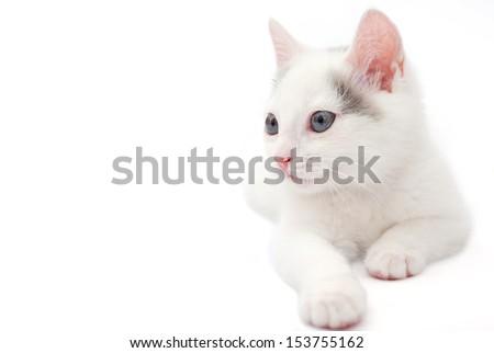 White kitten lying on the white background - stock photo