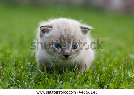 White kitten on the grass. Selective focus. - stock photo