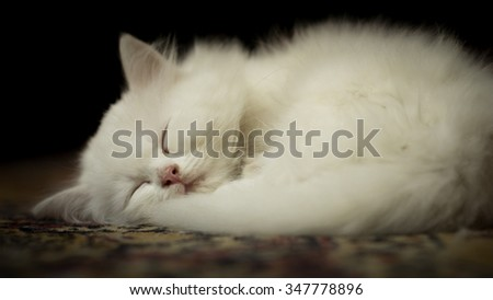 White kitten sleeping on carpet - stock photo