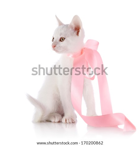 White kitten with a pink tape. Kitten on a white background. Small predator. Small cat.