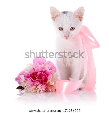 White kitten with a pink tape. White kitten and pink flower. Kitten on a white background. Small predator. Small cat.