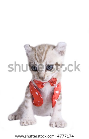 White kitten with blue eyes in red vest and bowtie with hearts on it