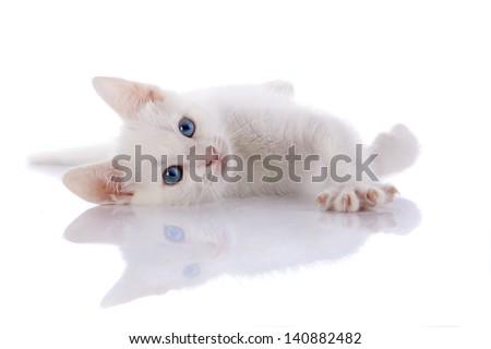 White kitten with blue eyes. Kitten on a white background. Small predator. Small cat. - stock photo