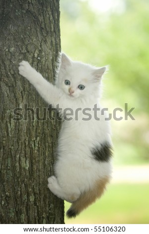 White kitten with bright blue eyes trying to climb a tree