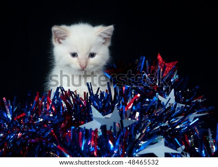 White kitten with Fourth of July streamers on black background - stock photo