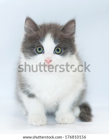 White kitten with gray spots and green eyes sitting on white-gray background
