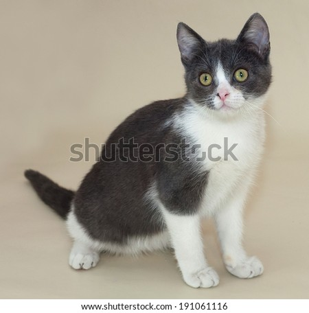 White kitten with gray spots sitting on yellow background
