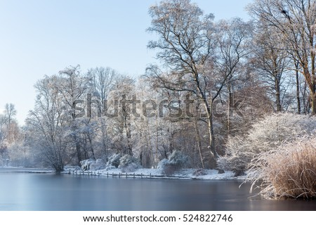 White landscape scenery showing lakeside of a frozen pond in garden with snow-covered trees and reed