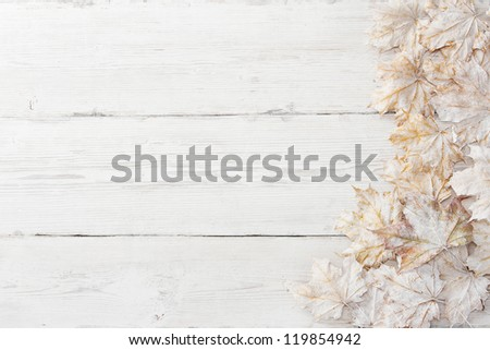 White leaves over wooden grunge background. Autumn maple - stock photo