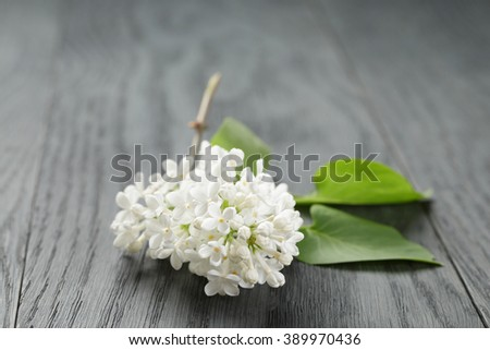 white lilac flower over wood table, shallow depth of field
