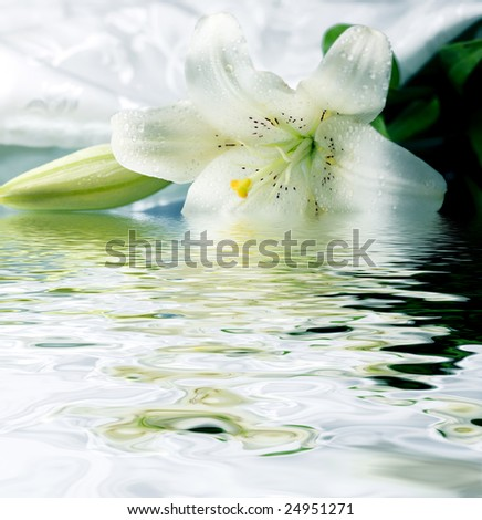 White lily reflected in the water - stock photo