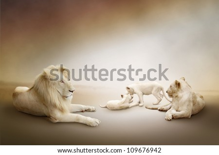 White lion family - stock photo
