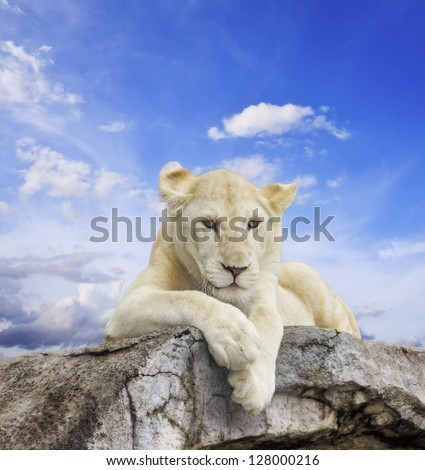 White lion with blue sky background. - stock photo