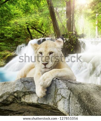 White lion with wild background. - stock photo