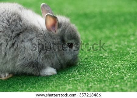 White little baby rabbit on faux green grass