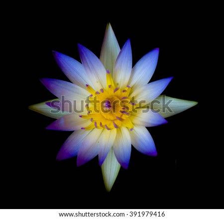 White lotus isolated on black background