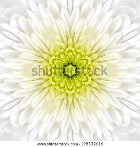 White Mandala Concentric Chrysanthemum Flower Kaleidoscope Center. Kaleidoscopic Design Pattern - stock photo