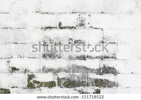 White moldy walls bricks, construction and architecture - stock photo