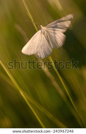 white moth in a grass - stock photo