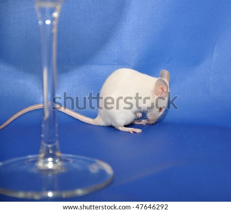 White mouse behind a glass. - stock photo
