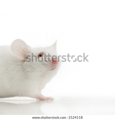 White Mouse in front of a white background