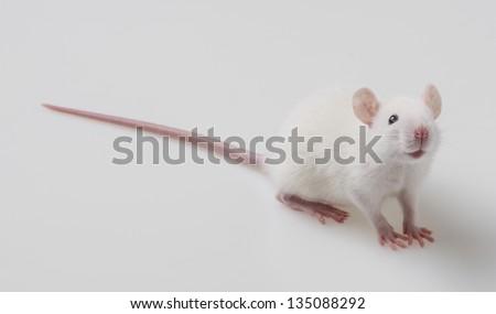 white mouse on a white background - stock photo