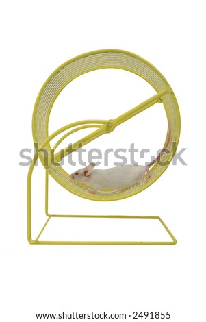 White mouse running on wheel - stock photo