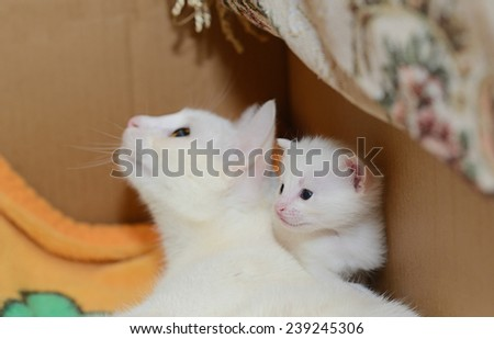 White Mummy cat with white kitten