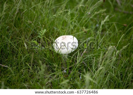 White mushroom on nature in the grass