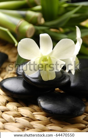 White orchid and black stone with branch bamboo in spa resort - stock photo