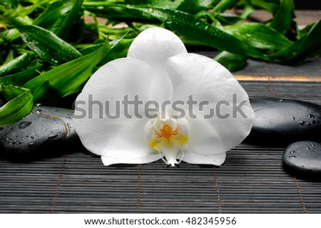 White orchid and black stones with green leaf on mat background