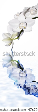 white orchid and water level - stock photo