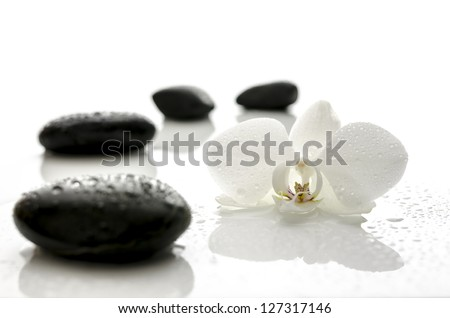 White orchid flower and black spa stones with water drops.
