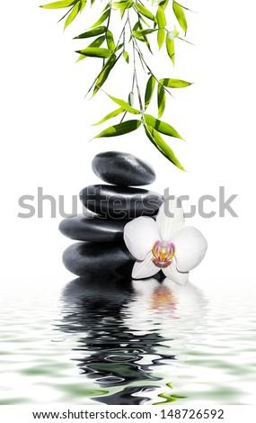 white orchid flower end bamboo  - stock photo
